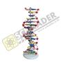 แบบจำลอง DNA แบบ 2