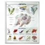 แผ่นภาพนูนไทย 3D เรื่องโพรทิสต์ (Protists)