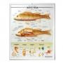 แผ่นภาพนูนไทย 3D เรื่องปลากระดูกแข็ง (Bony Fish)